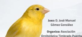 XVIII CONCURSO LANZAROTE – 2019